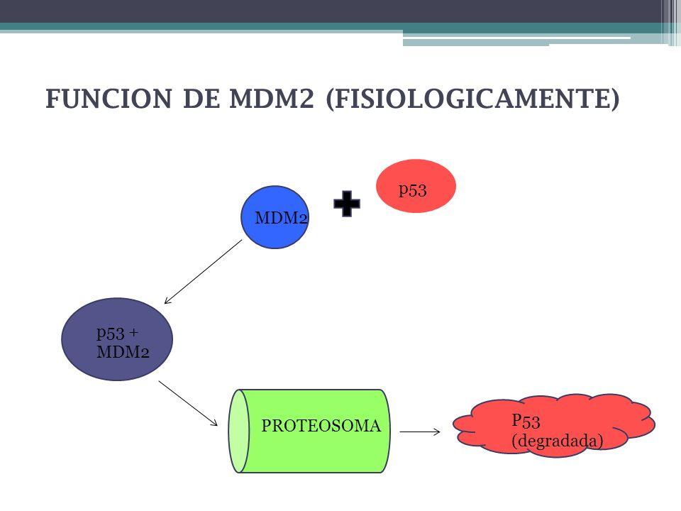 FUNCION DE MDM2 (FISIOLOGICAMENTE)