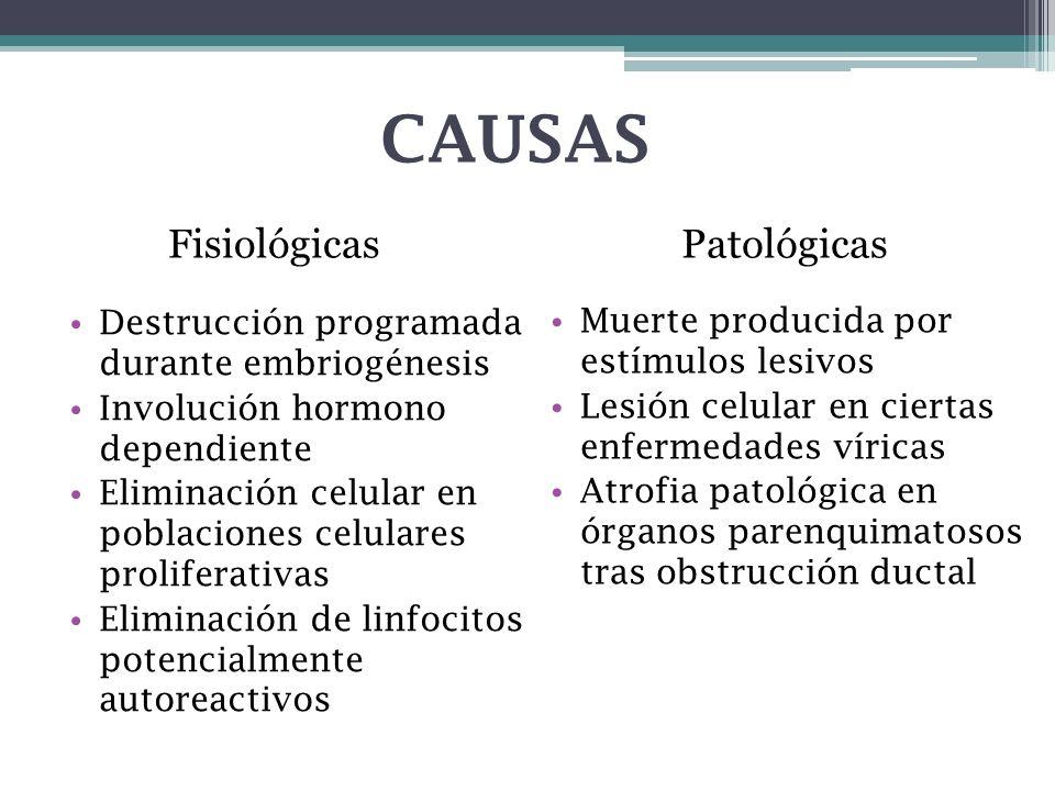 CAUSAS Fisiológicas Patológicas