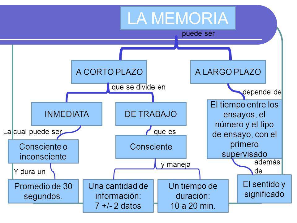 LA MEMORIA A CORTO PLAZO A LARGO PLAZO