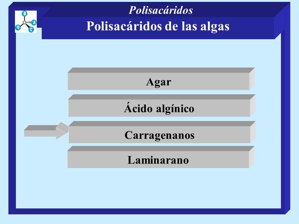 Polisacáridos de las algas