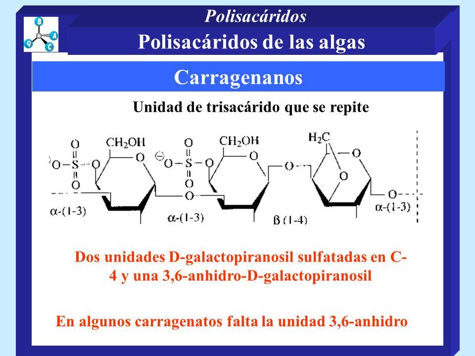 Polisacáridos de las algas Carragenanos