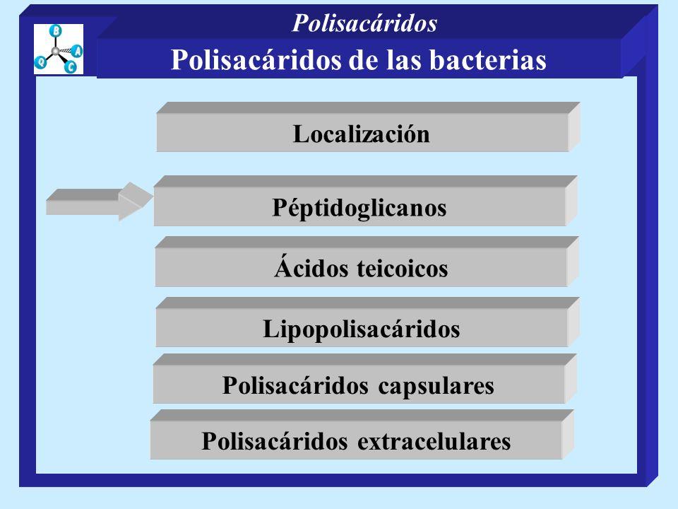 Polisacáridos de las bacterias