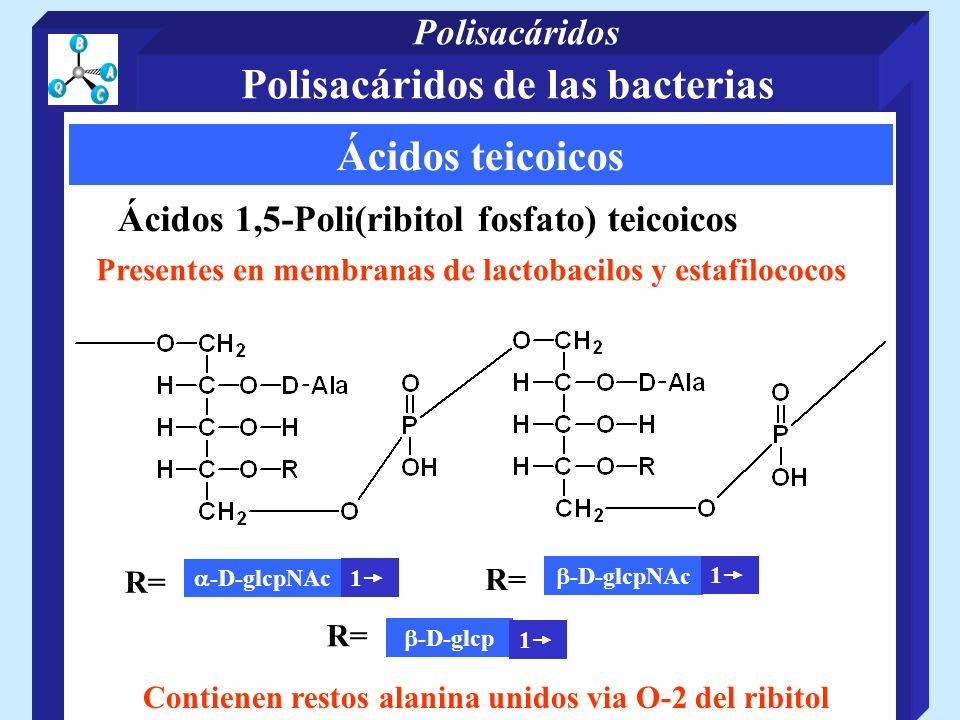 Polisacáridos de las bacterias Ácidos teicoicos