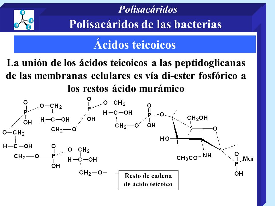 Polisacáridos de las bacterias Resto de cadena de ácido teicoico