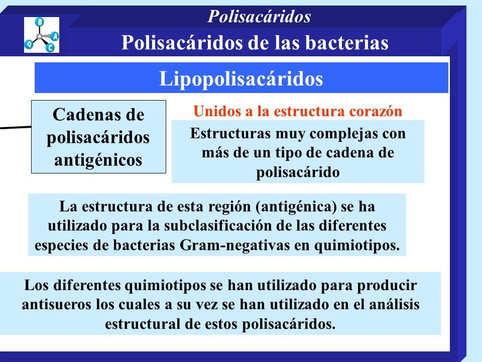 Polisacáridos de las bacterias Lipopolisacáridos