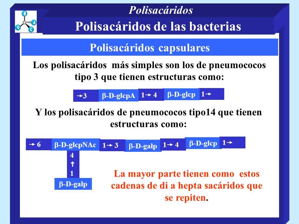 Polisacáridos de las bacterias Polisacáridos capsulares