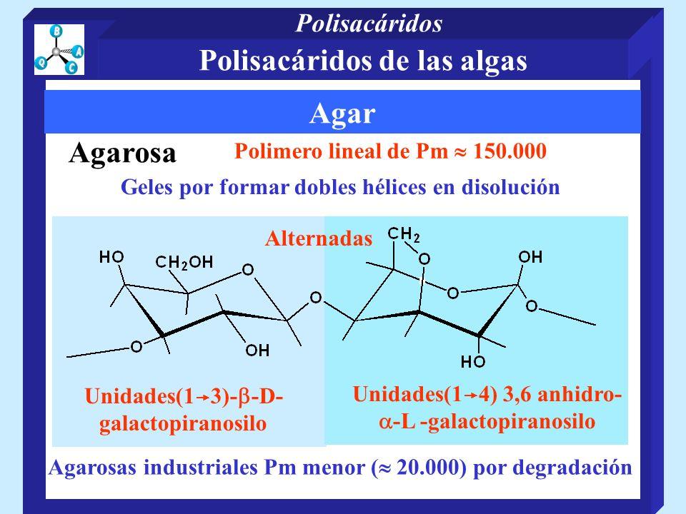 Polisacáridos de las algas Agar Agarosa