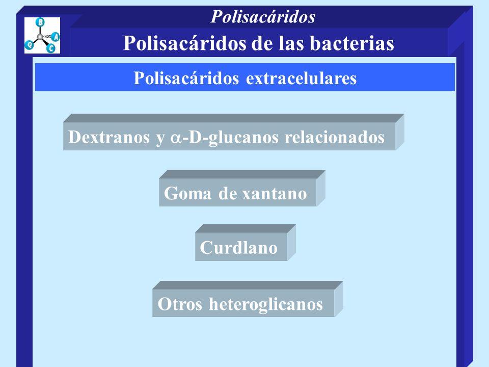 Polisacáridos de las bacterias Polisacáridos extracelulares
