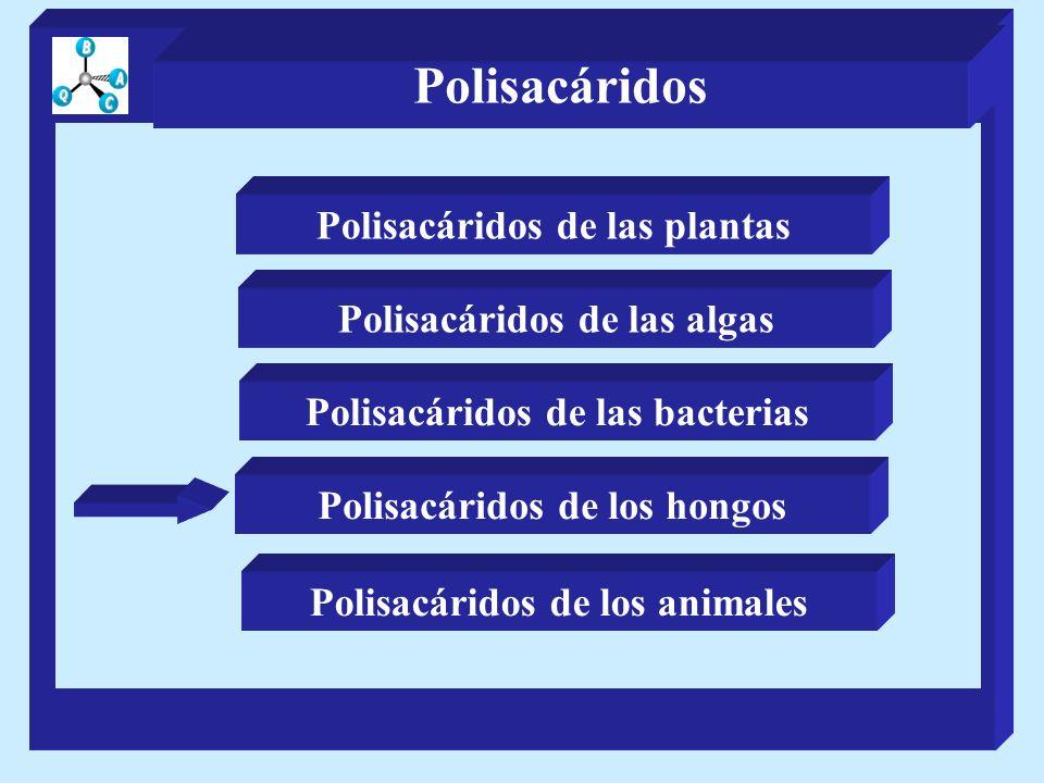 Polisacáridos Polisacáridos de las plantas Polisacáridos de las algas