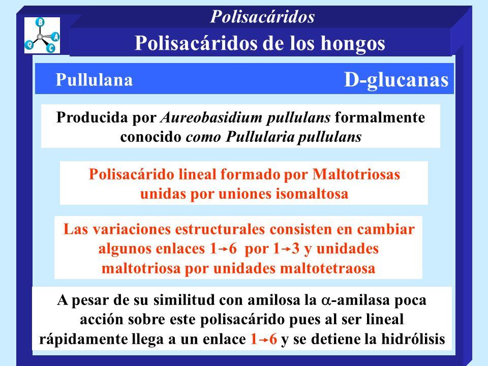 Polisacáridos de los hongos