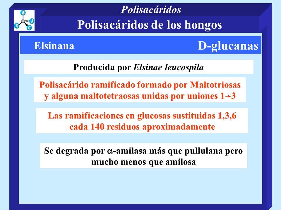 Polisacáridos de los hongos Producida por Elsinae leucospila