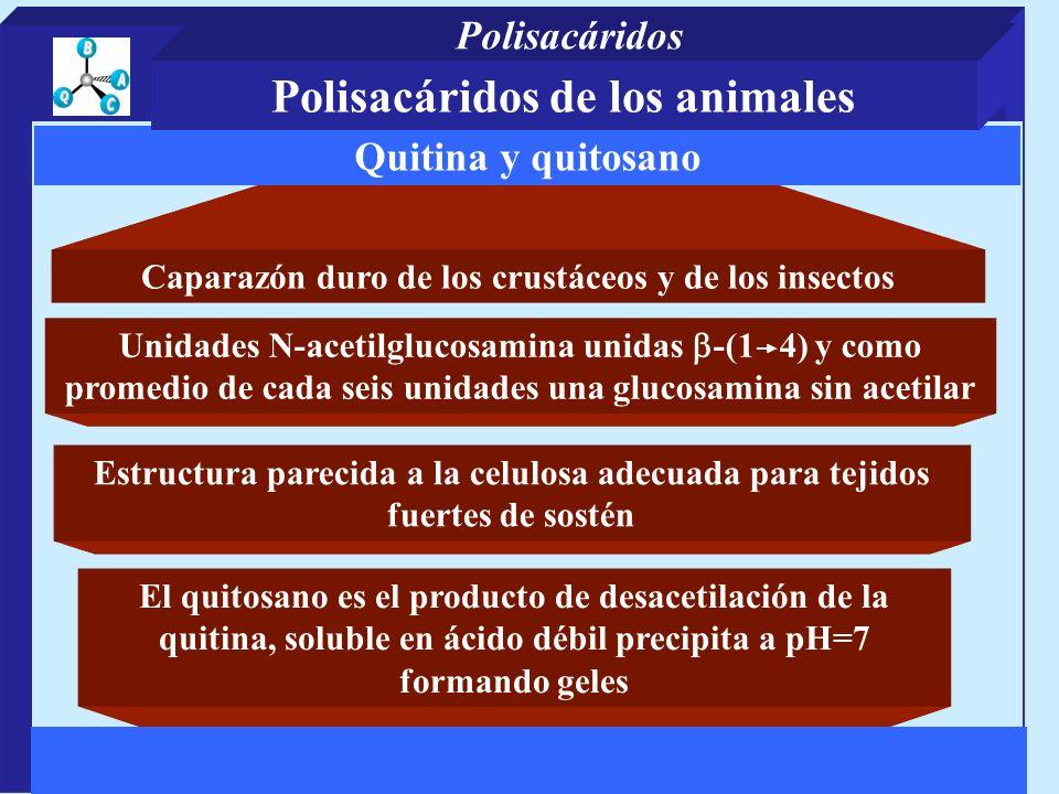 Polisacáridos de los animales