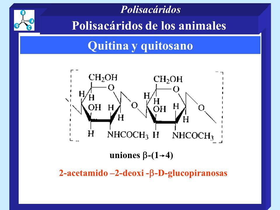 Polisacáridos de los animales 2-acetamido –2-deoxi -b-D-glucopiranosas