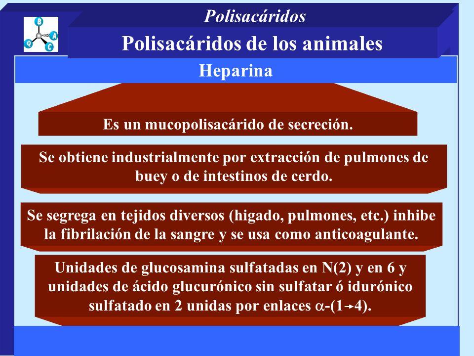 Polisacáridos de los animales Es un mucopolisacárido de secreción.