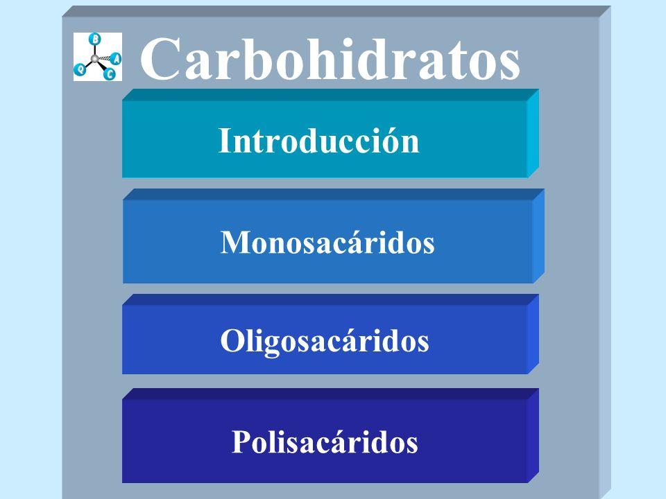 Carbohidratos Introducción Monosacáridos Oligosacáridos Polisacáridos