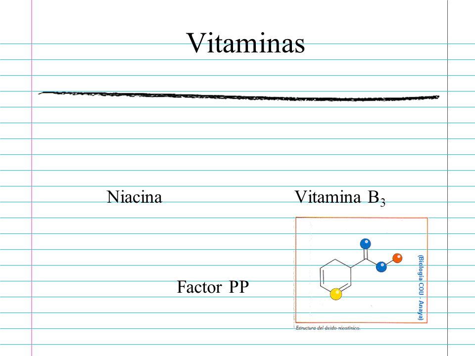 Vitaminas Niacina Vitamina B3 Factor PP