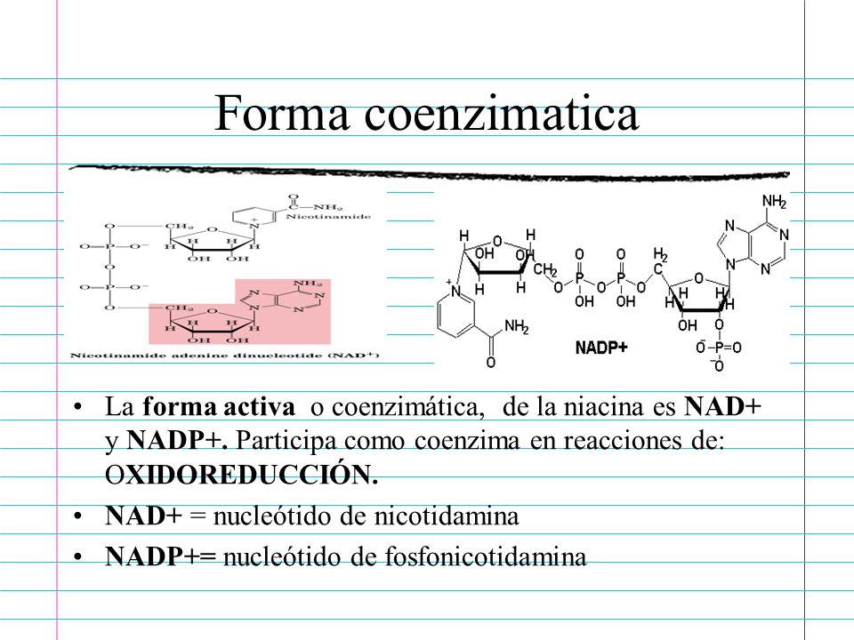 Forma coenzimaticaLa forma activa o coenzimática, de la niacina es NAD+ y NADP+. Participa como coenzima en reacciones de: OXIDOREDUCCIÓN.