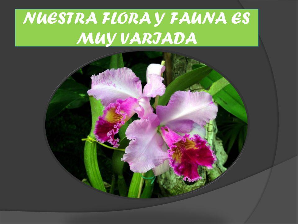 NUESTRA FLORA Y FAUNA ES MUY VARIADA
