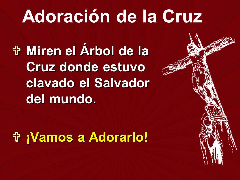 Adoración de la Cruz Miren el Árbol de la Cruz donde estuvo clavado el Salvador del mundo.