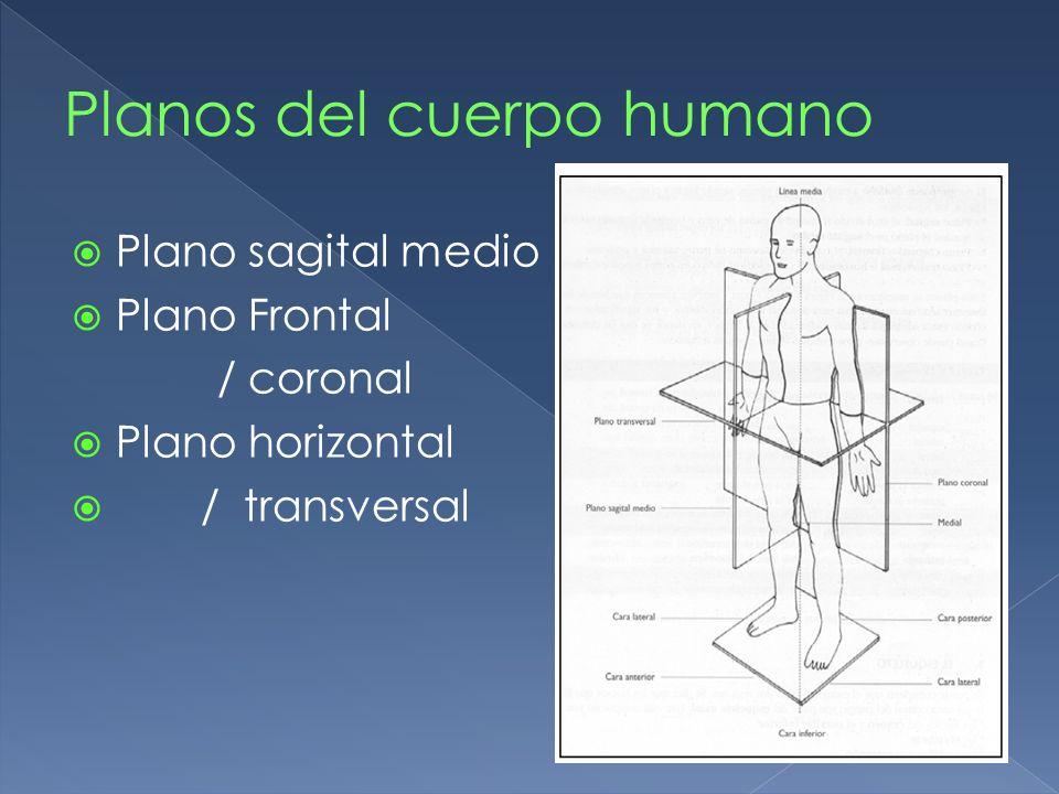 Planos del cuerpo humano