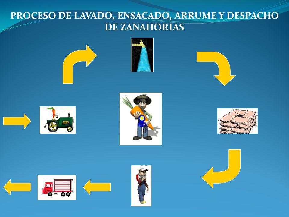 PROCESO DE LAVADO, ENSACADO, ARRUME Y DESPACHO DE ZANAHORIAS