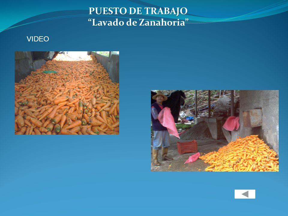 PUESTO DE TRABAJO Lavado de Zanahoria