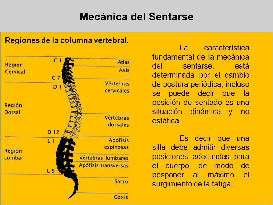 Mecánica del Sentarse Regiones de la columna vertebral.