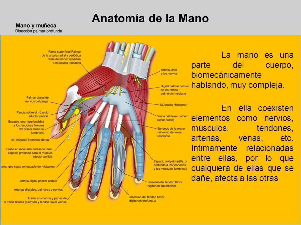 Anatomía de la Mano La mano es una parte del cuerpo, biomecánicamente hablando, muy compleja.