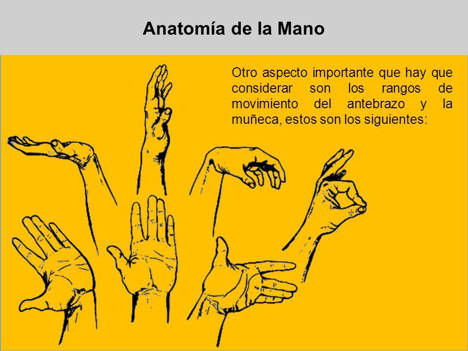 Anatomía de la ManoOtro aspecto importante que hay que considerar son los rangos de movimiento del antebrazo y la muñeca, estos son los siguientes: