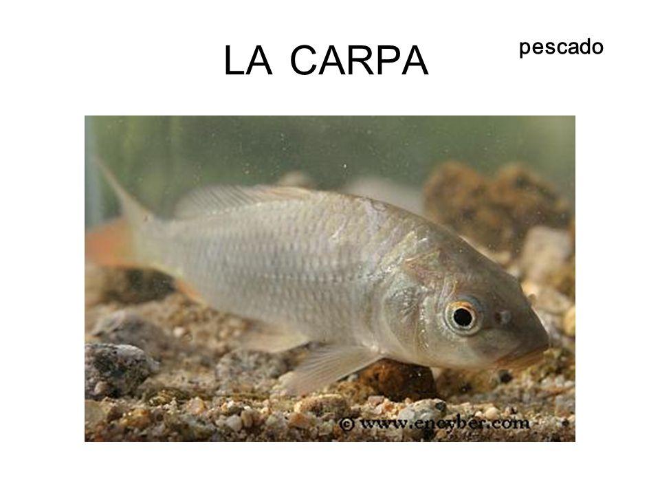 LA CARPA pescado