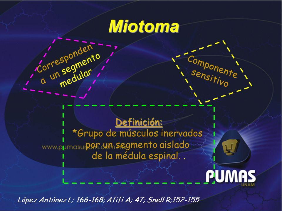 Miotoma Corresponden a un segmento Componente medular sensitivo