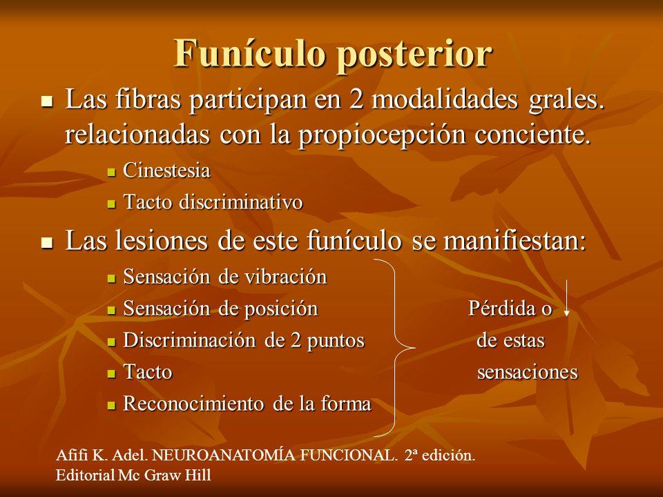 Funículo posterior Las fibras participan en 2 modalidades grales. relacionadas con la propiocepción conciente.