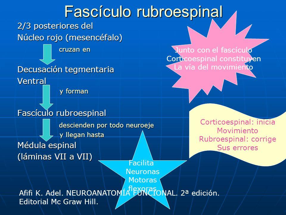 Fascículo rubroespinal