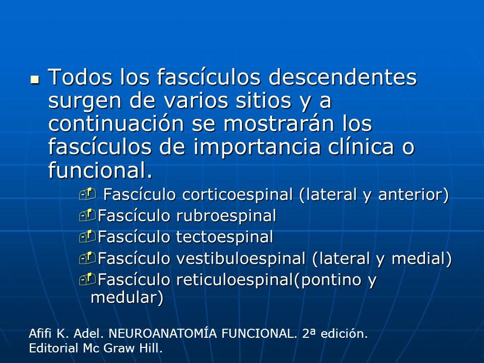 Todos los fascículos descendentes surgen de varios sitios y a continuación se mostrarán los fascículos de importancia clínica o funcional.