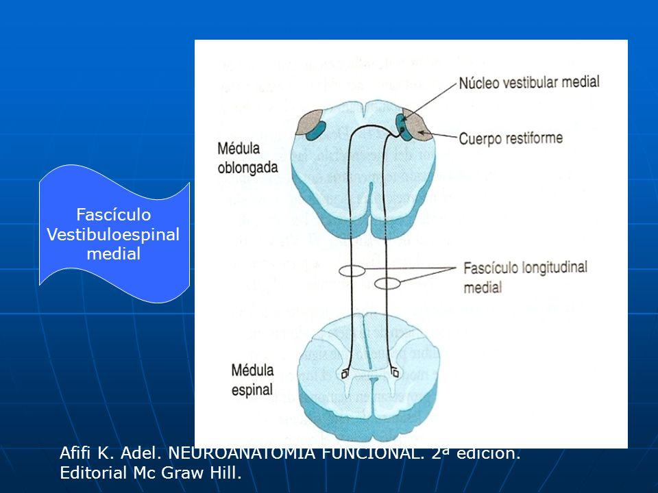 Fascículo Vestibuloespinal. medial. Afifi K. Adel.