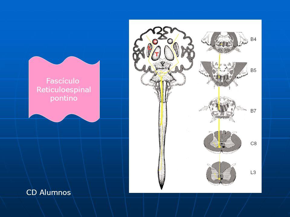 Fascículo Reticuloespinal pontino CD Alumnos