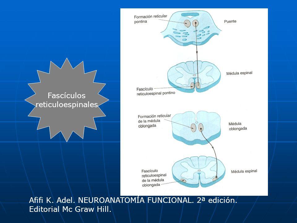 Fascículos reticuloespinales. Afifi K. Adel. NEUROANATOMÍA FUNCIONAL.