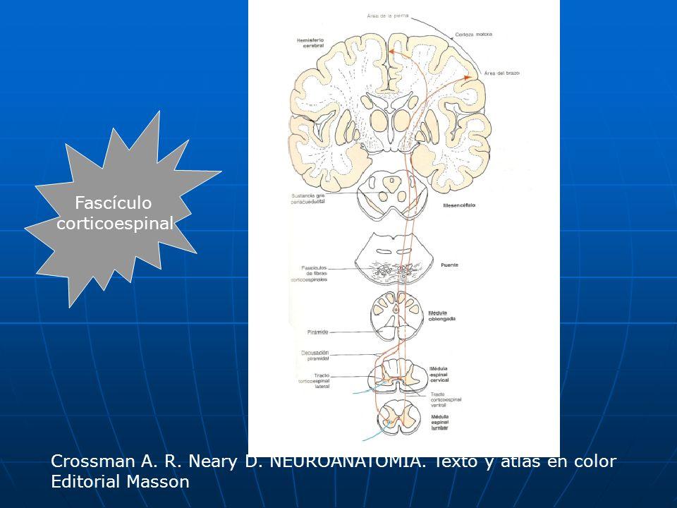 Fascículocorticoespinal.Crossman A. R. Neary D. NEUROANATOMÍA.