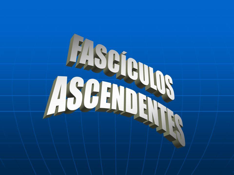 FASCÍCULOS ASCENDENTES