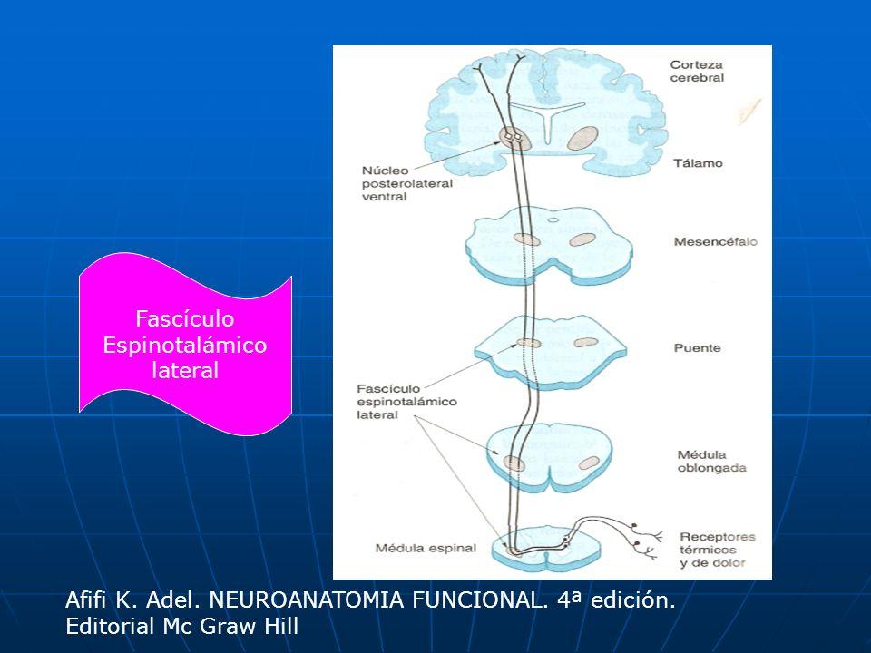 Fascículo Espinotalámico. lateral. Afifi K. Adel.