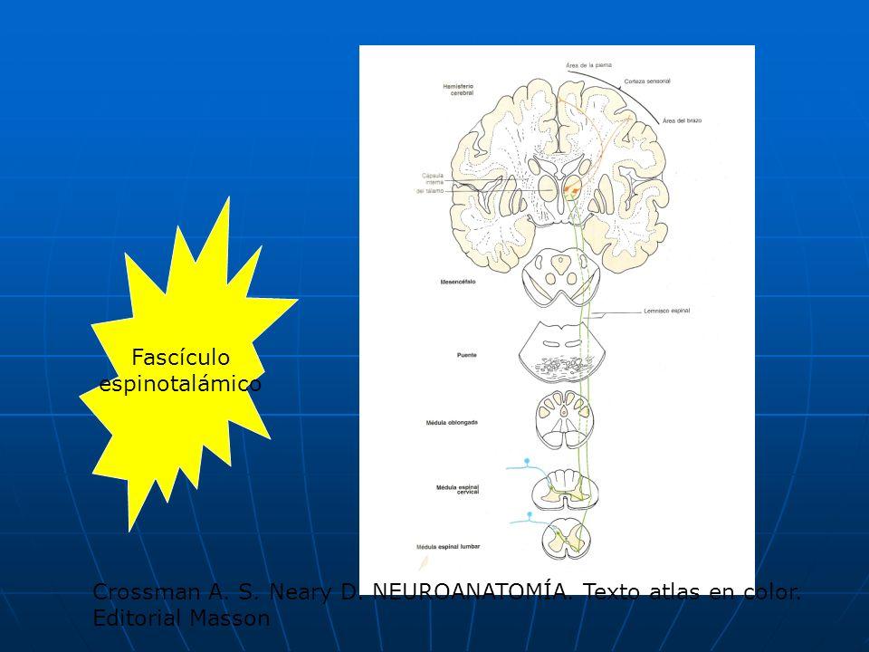 Fascículoespinotalámico.Crossman A. S. Neary D. NEUROANATOMÍA.