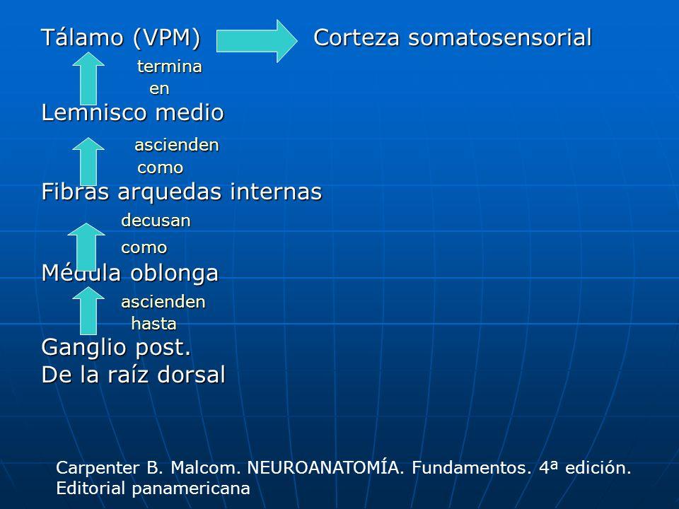 ascienden Tálamo (VPM) Corteza somatosensorial termina Lemnisco medio