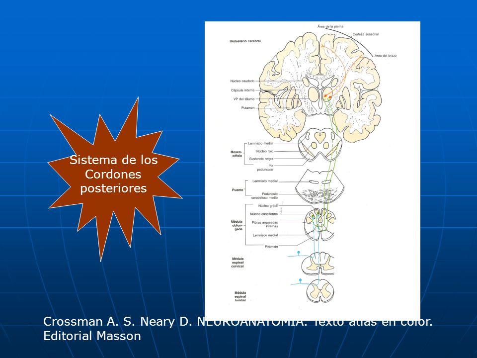 Sistema de los Cordones. posteriores. Crossman A. S. Neary D. NEUROANATOMÍA. Texto atlas en color.