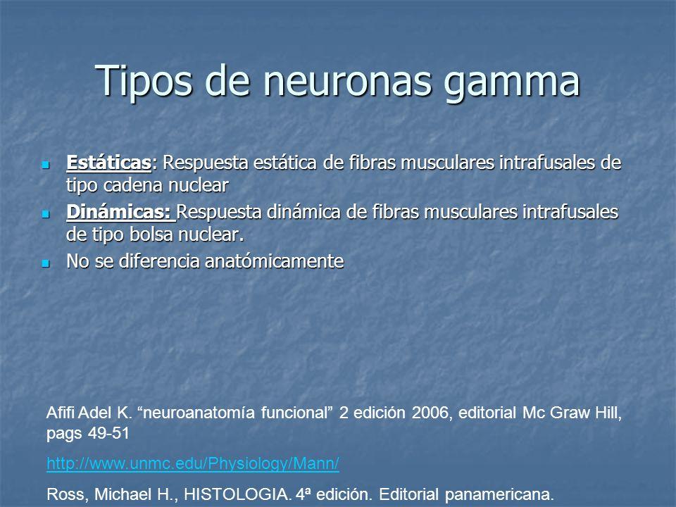 Tipos de neuronas gamma