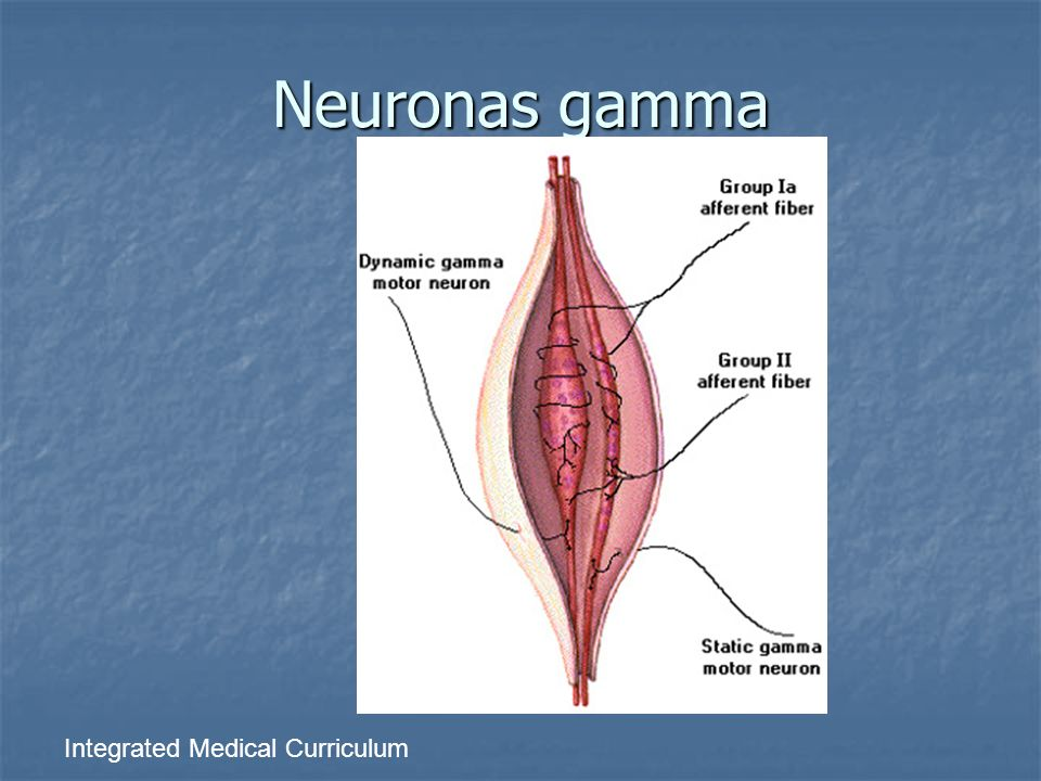 Neuronas gamma Integrated Medical Curriculum