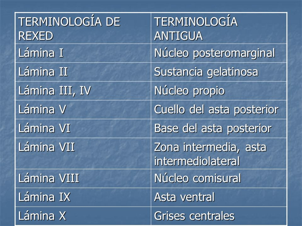TERMINOLOGÍA DE REXEDTERMINOLOGÍA ANTIGUA. Lámina I. Núcleo posteromarginal. Lámina II. Sustancia gelatinosa.
