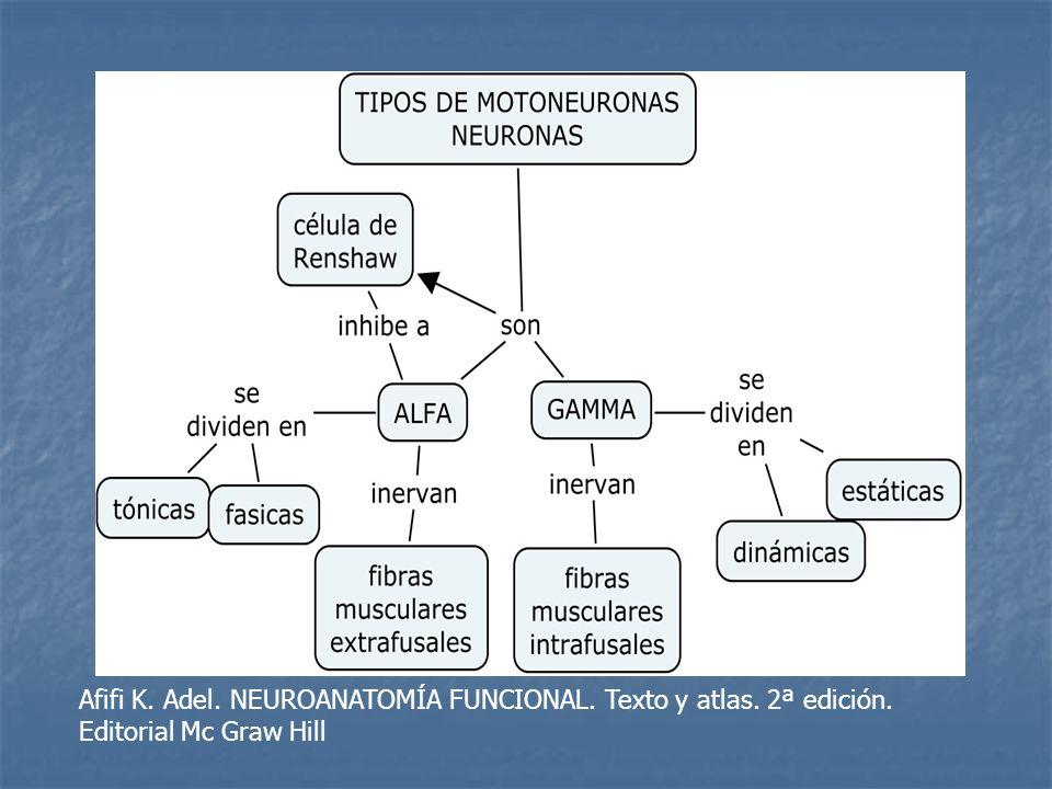 Afifi K. Adel. NEUROANATOMÍA FUNCIONAL. Texto y atlas. 2ª edición.