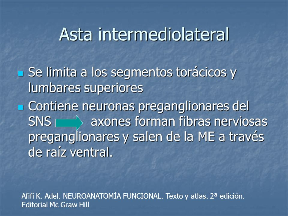 Asta intermediolateral
