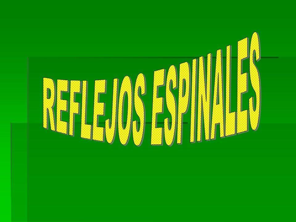 REFLEJOS ESPINALES