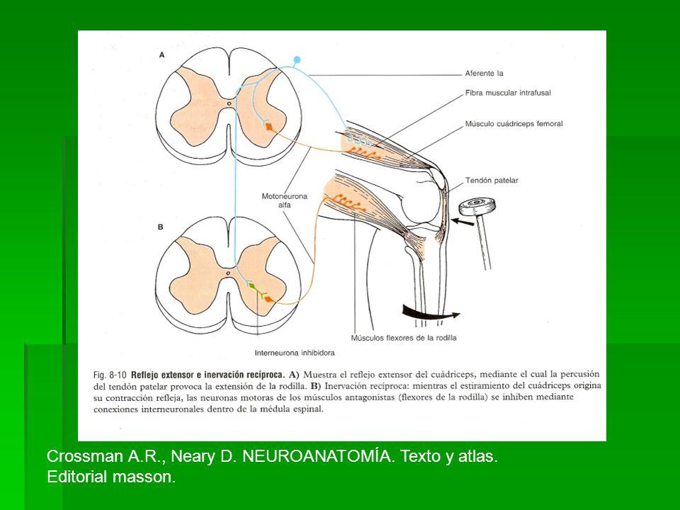 Crossman A.R., Neary D. NEUROANATOMÍA. Texto y atlas.